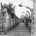 Auschwitz Wire & Stantions AA