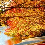 RI boats_leaves